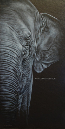 Close Encounter - elephant
