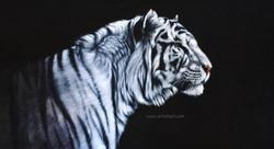 Moonlight Stroll - tiger