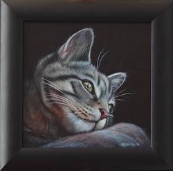 Bengal Kitty on pillow