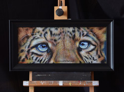 Cats Eyes Series - Leopard