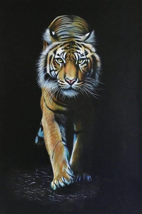 Out Of The Dark tiger
