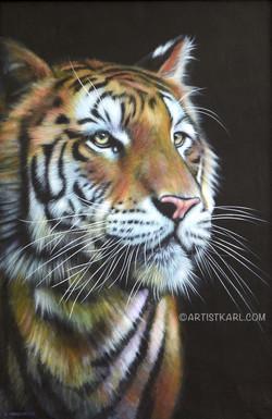 Yang - tiger