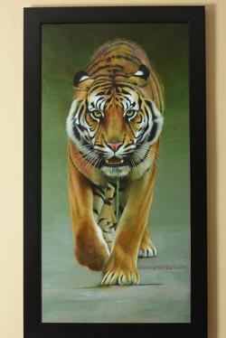 Coming At You - tiger