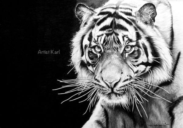 black and white portrait tiger