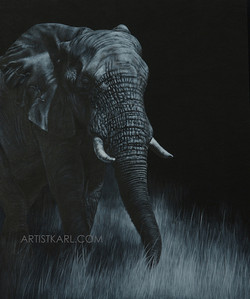 Twilight Stroll - elephant