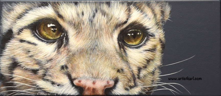 Cats Eyes Series - Ocelot