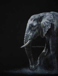 Moonlight Stroll - elephant