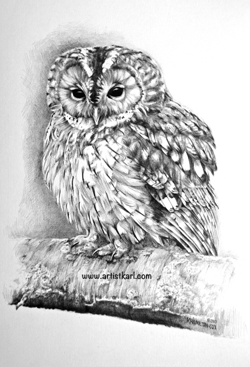 Tawny Owl pencil drawing