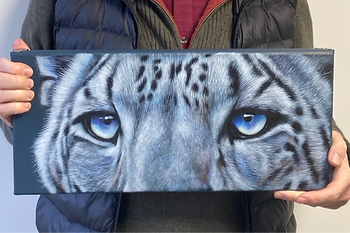 Snow Leopard eyes - large