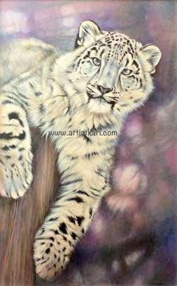 Curiosity - snow leopard
