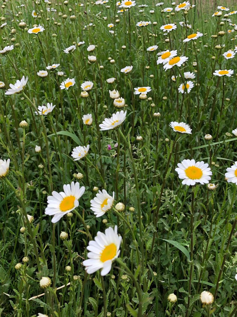 Bloemen langs de velden