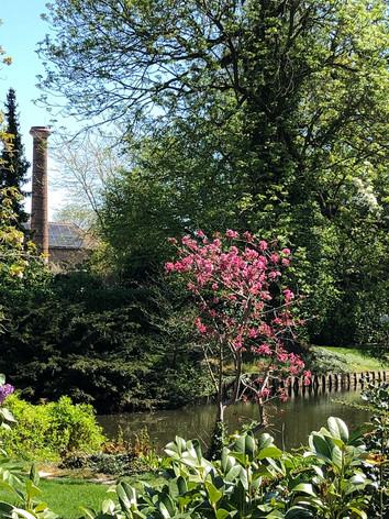 Mooie tuin aan de watermolen