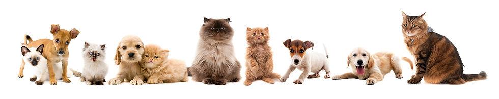 Faixa Pets HOME.jpg