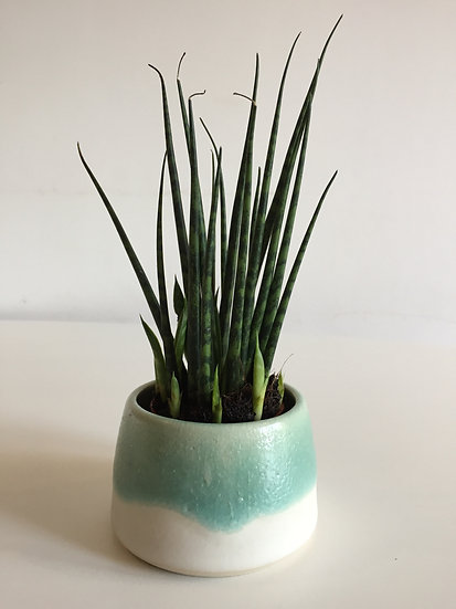 Green and white plant pot - small