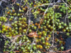 mossy moss.jpg