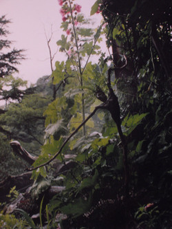 Driade In Natur