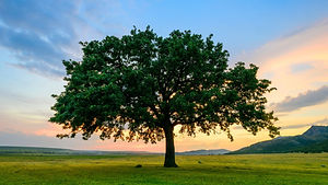 TreeStayTiny.jpg