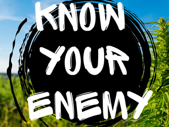 Know Your Enemy: Post List