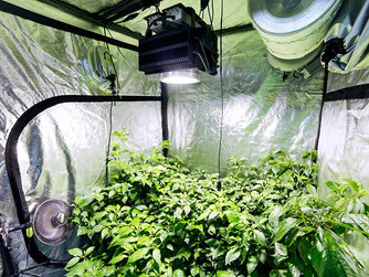 What do I need to get started growing indoors?