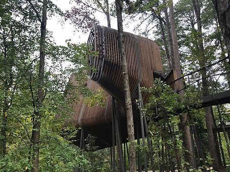TREEHOUSE PICTURE.jpg