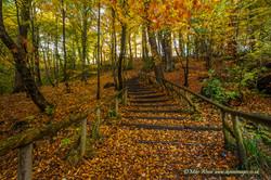 wepre steps