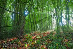 wepre castle sunlight through the trees
