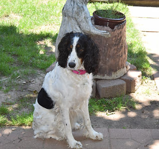 Storyside Springers - Our Springers