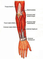 forearm-tendinopathy.jpg