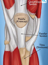quadriceps tendinopathy.jpg