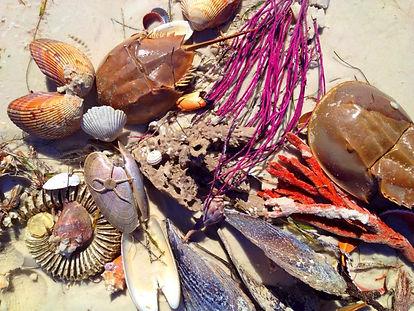beachtreasures.jpg