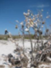 shelltree.jpg