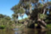 Terra Ceia Aquatic Preserve -DEP-staff-R
