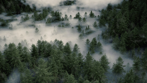 misty forest post.jpg