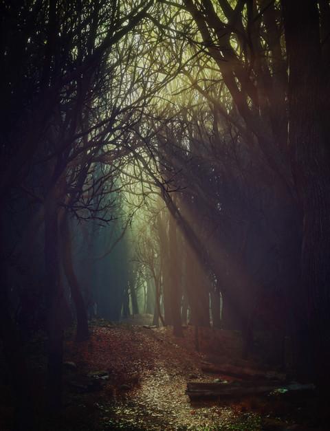 Autumn Forest.jpg