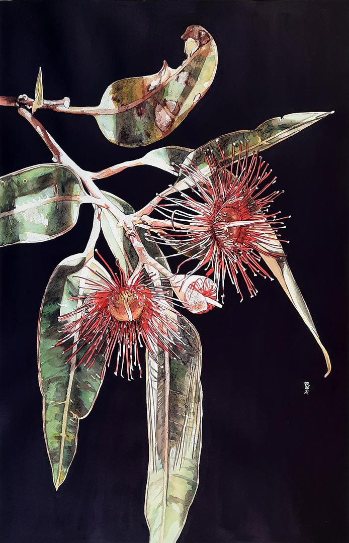 Romancing Botany -Judy Rogers.jpg
