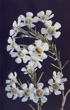 T1 Romancing Botany