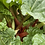 Thumbnail: Rhubarb