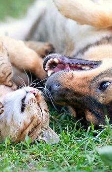American Heritage Animal Hospital Pet Dental Care