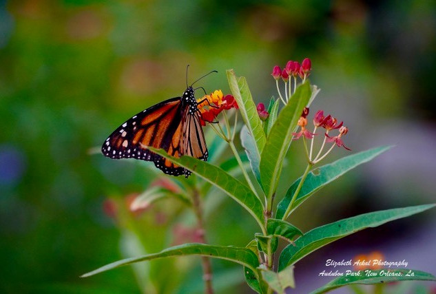Elizabeth Ackal Photography Audubon Park