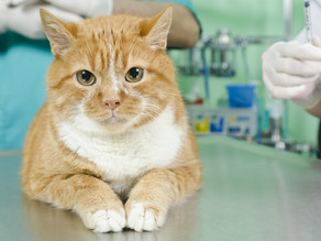 Kidney Health In Your Pet: Why bloodwork is key!