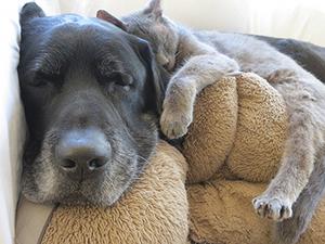 Eno Animal Hospital Adopt A Senior Pet Month