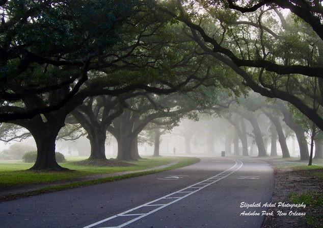 Elizabeth Ackal Photography Audubon Park Track