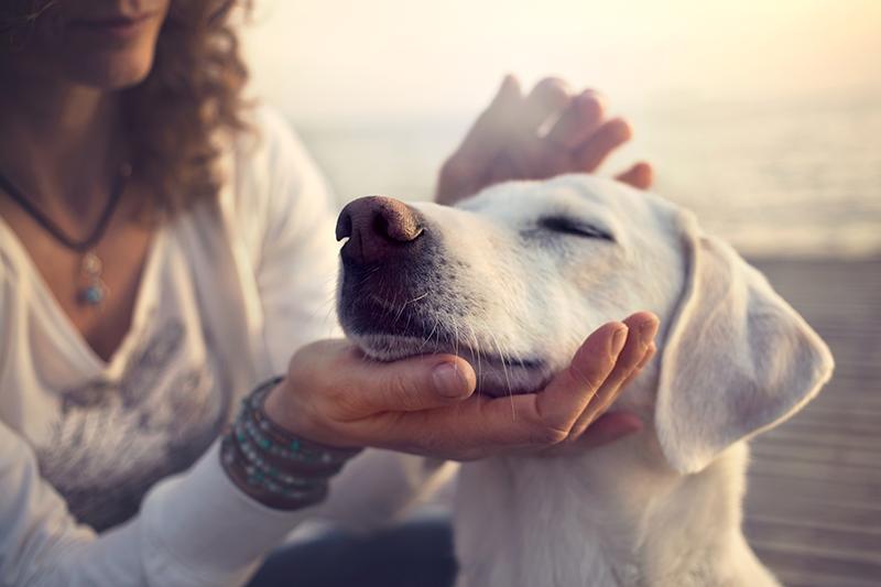 Benbow Vet Services Animal Pain Awareness