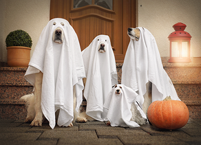 Halloween Safety For Pets
