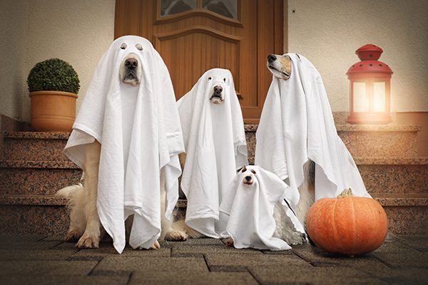 Benbow Veterinary Services Halloween Safety for Pets