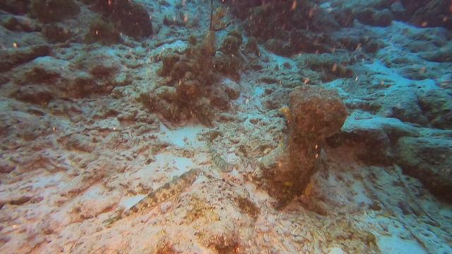 Bonaire Buddies - Sand Divers
