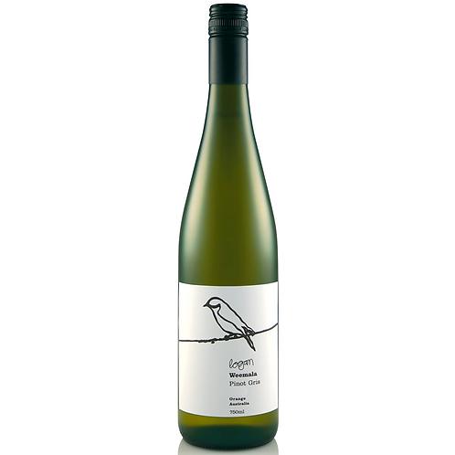 Logan Weemala Pinot Gris 750mL 12.5%