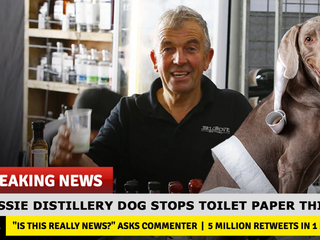 Heroic Distillery Dog