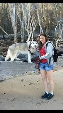husky dog walker