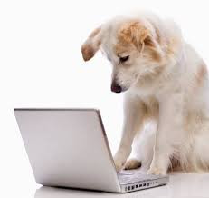 dog pet sitting blog